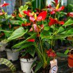 Blume Blumen Strasser