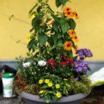Schuessel Blumen Strasser