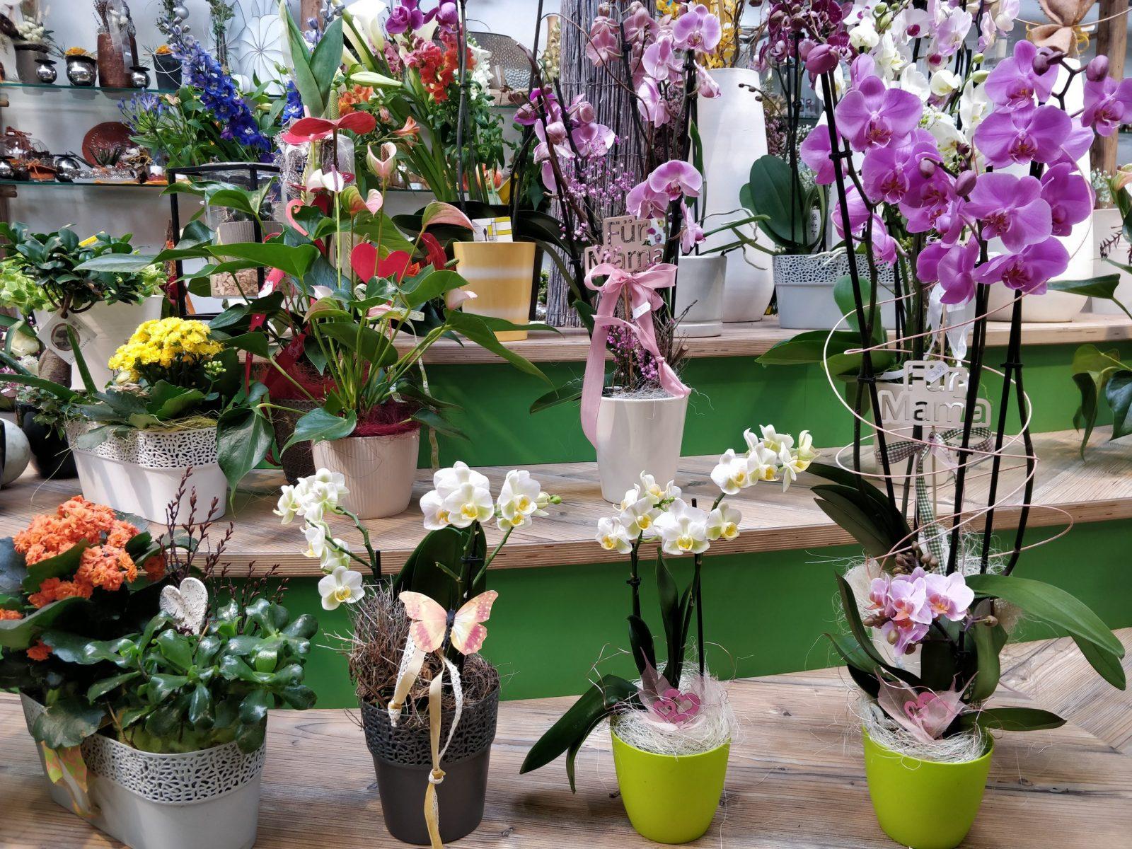 Topfpflanzen für den Muttertag